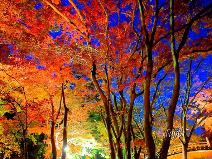 熱海温泉の観光スポットでは、紅葉ライトアップが素晴らしい「熱海梅園」が断然お勧め!