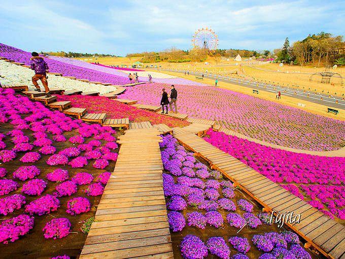 関東三大イルミネーションも大人気「東京ドイツ村」