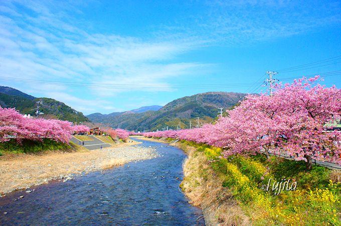 河津桜が絶景すぎる!「河津桜まつり」おすすめ撮影ポイント