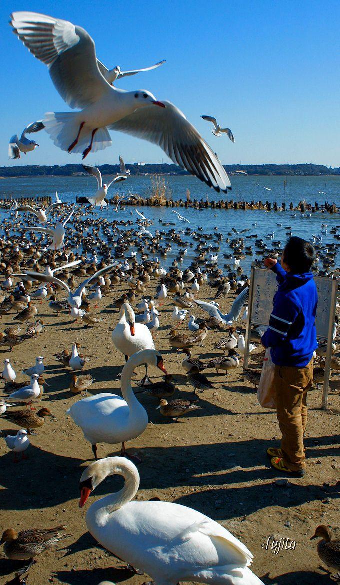 合成ではありません!水鳥に襲われる写真でSNS映えを狙う
