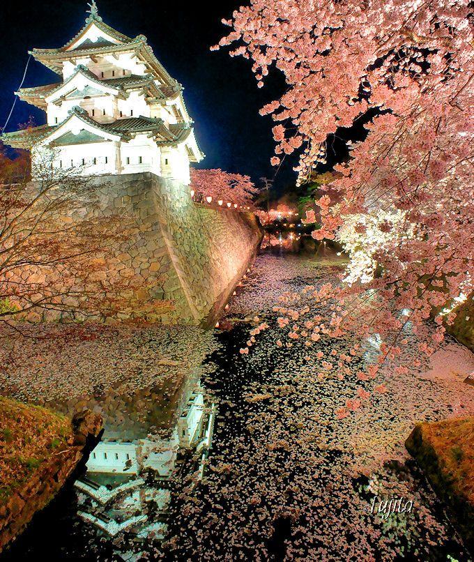 弘前さくらまつり「弘前城天守と桜」ライトアップは日本三大夜桜の絶景