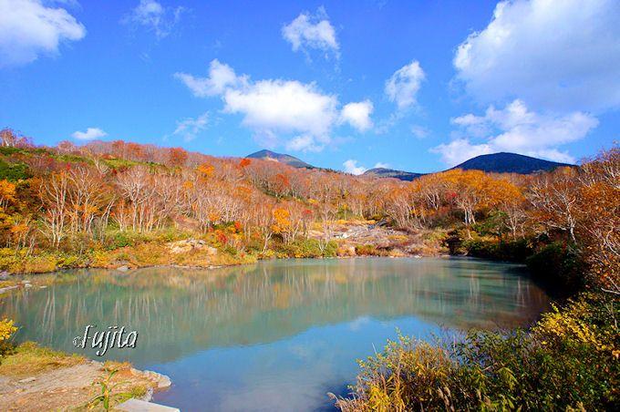 四季を通して楽しめる「八甲田」でハイキング