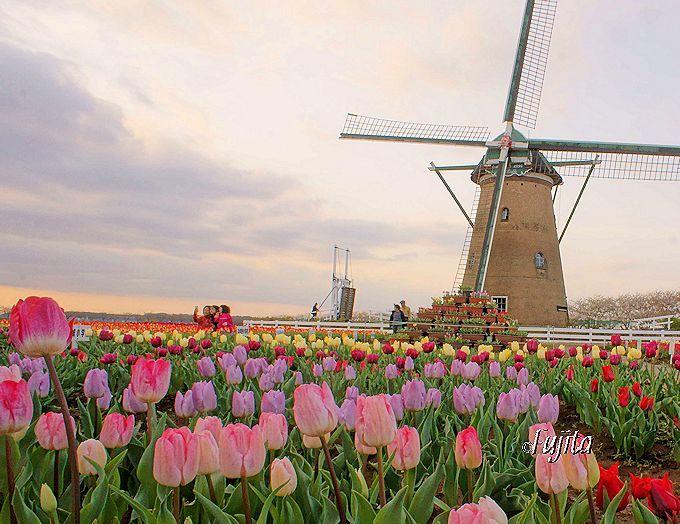 佐倉を観光するなら「オランダ風車」と「国立歴史博物館」