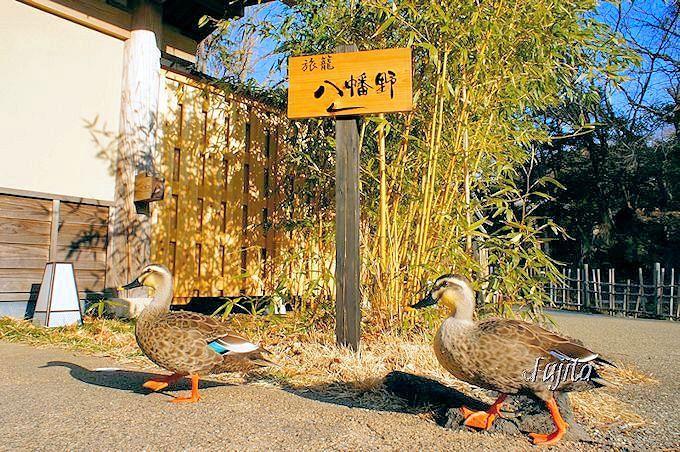 鴨が出迎え!「八幡野温泉郷 杜の湯 きらの里」〜伊豆高原・伊東市〜