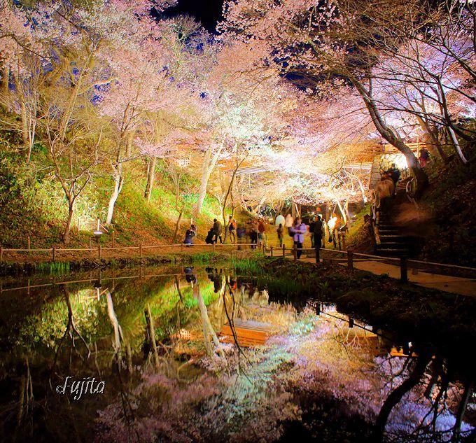 日本三大桜名所は夜桜も絶景!高遠城址公園〜長野県伊那市〜