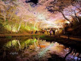日本三大桜名所は夜桜も絶景!高遠城址公園~長野県伊那市~|長野県|トラベルjp<たびねす>