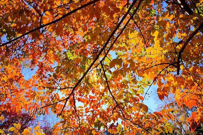 京成バラ園の冬は、晩秋の風情