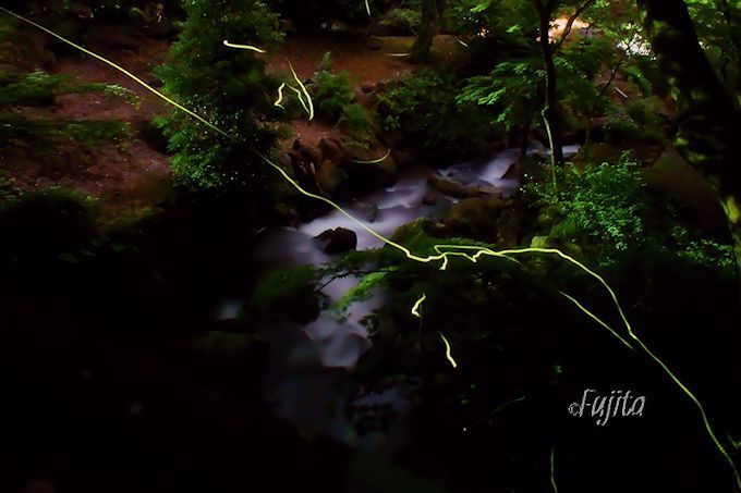 熱海梅園のホタルは、空いている場所を探して撮影しよう!