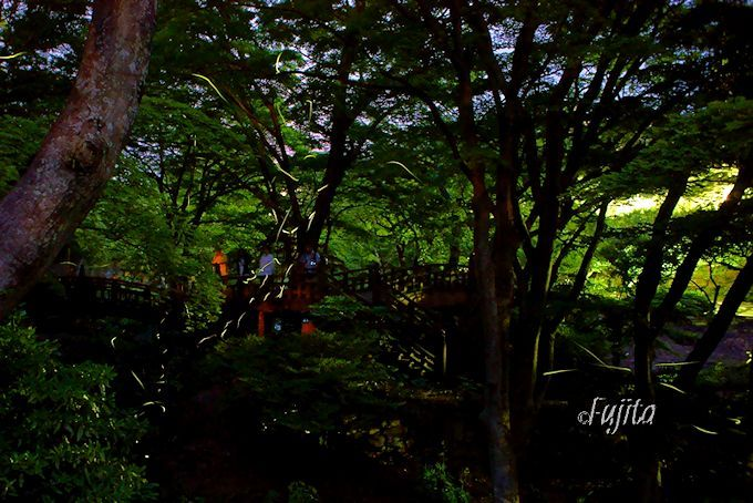 熱海梅園「ほたる観賞の夕べ」おすすめ絶景スポットと写真撮影方法