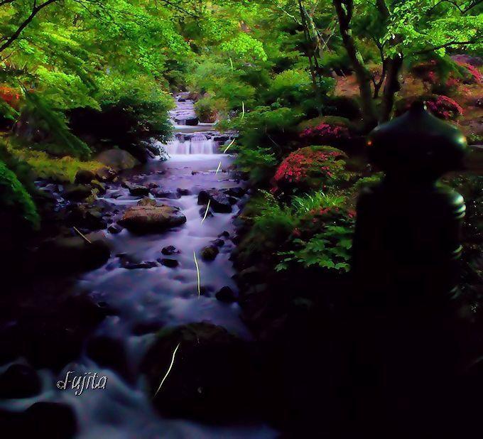 ホタルと清流の絶景!熱海梅園「ほたる観賞の夕べ」写真撮影法