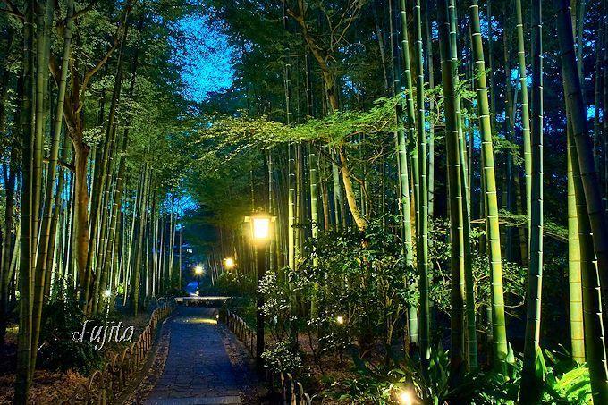 ホタル観賞の前に「竹林の小径」のライトアップも必見!