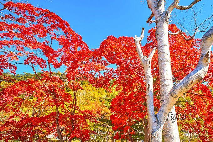 日光湯元温泉街には真っ赤な紅葉や白樺の絶景スポットも!