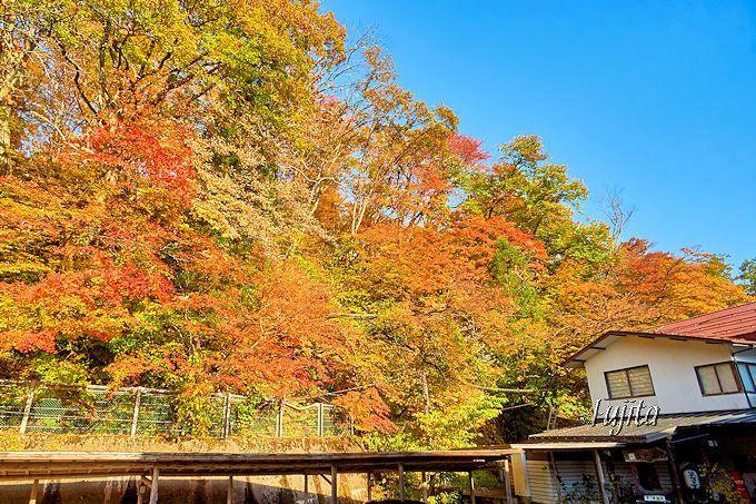 絶景の紅葉が出迎える!秋の宮温泉郷「鷹の湯温泉」