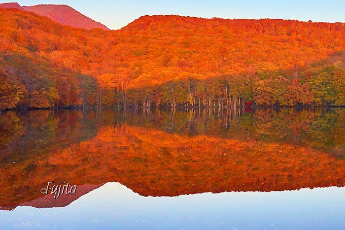 朝焼けに燃え上がる!蔦沼の紅葉は奇跡的な絶景