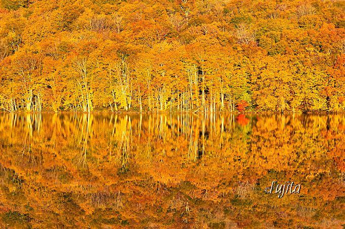 名前通りの絶景!「朝日に映え黄金に輝く蔦沼の紅葉」