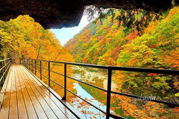 紅葉の抱返り渓谷は、トンネルから「振り返って」見ると一層美しい!