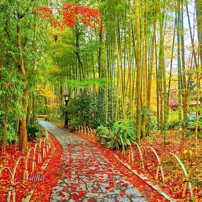 緑と赤のコントラストが幻想的!修善寺温泉「竹林の小径」の紅葉