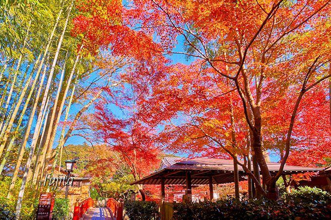 修善寺温泉で一番の紅葉の絶景!「竹林の小径」入口付近の紅葉