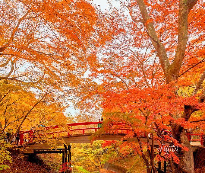 伊香保温泉「河鹿橋」の紅葉は、ライトアップに備え上流側からも見よう!