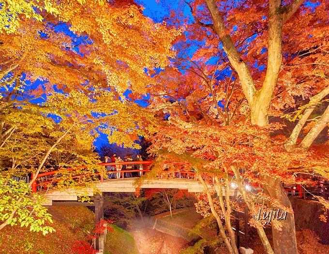 夕方がおすすめ!伊香保温泉「河鹿橋」紅葉ライトアップ