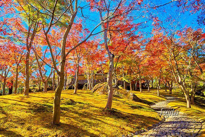 一番乗りした人限定の絶景!誰も居ない箱根美術館「苔庭」の紅葉