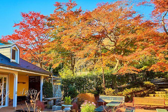 箱根美術館より開園が早い!強羅公園で共通券を購入し紅葉狩り