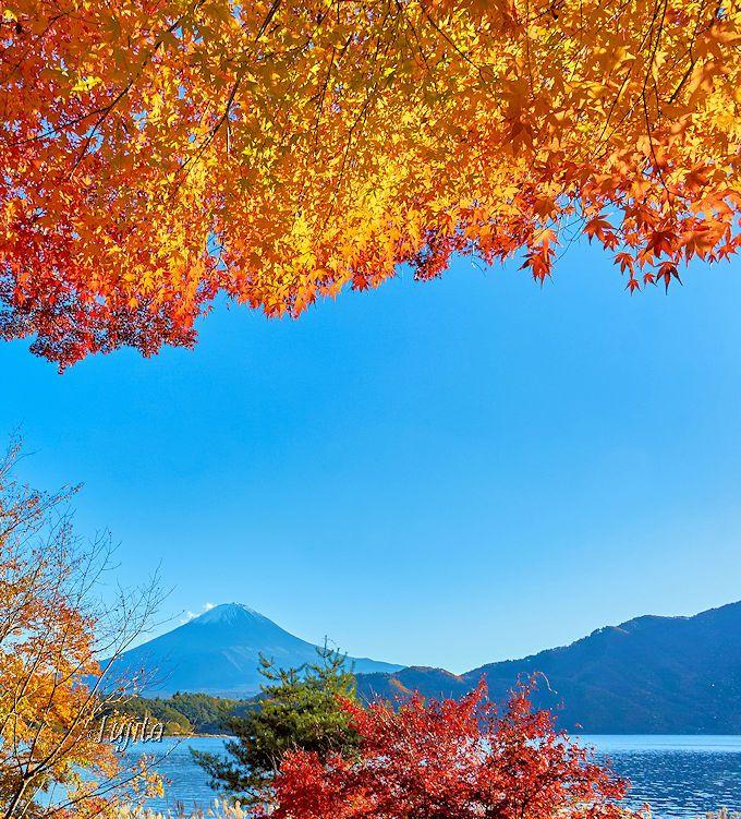河口湖北岸「もみじトンネル」は、富士山と河口湖と紅葉が絶景!