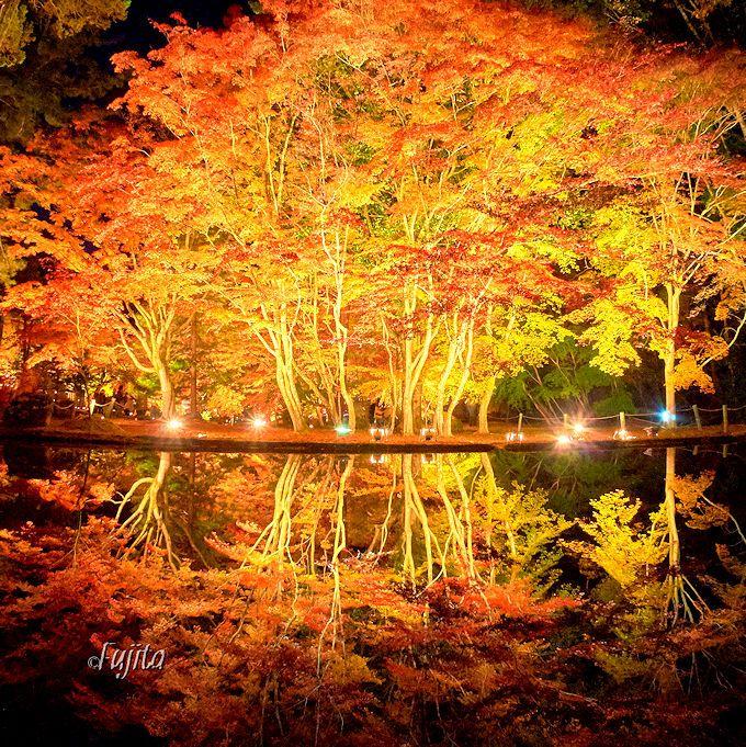 岐阜・曽木公園で紅葉狩り!ライトアップされた「逆さ紅葉」が絶景