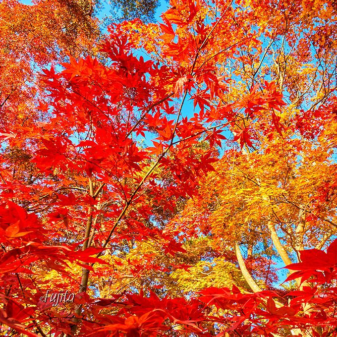 長瀞で紅葉狩り!「岩畳」と「月の石もみじ公園」が紅葉名所(埼玉)