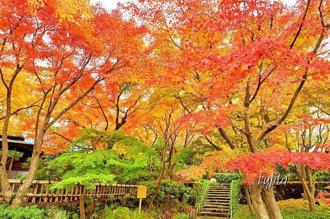 MOA美術館「茶の庭」で、紅葉狩りを満喫!