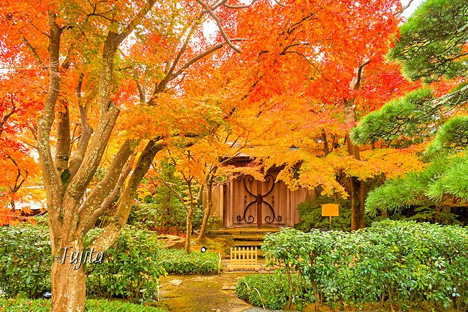 紅葉名所を無料公開!熱海温泉・MOA美術館は箱根美術館の本館
