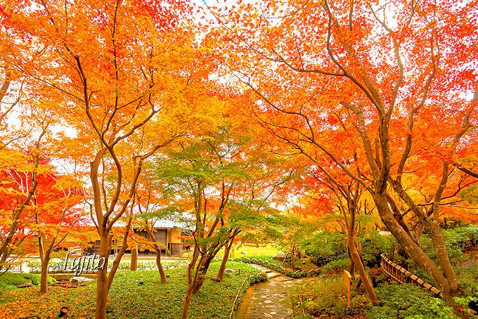 MOA美術館「茶の庭」の紅葉と光琳屋敷