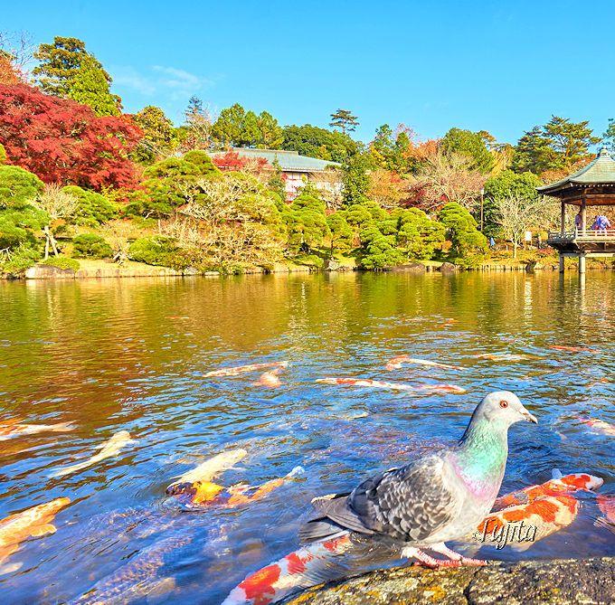 成田山公園「竜智の池」の紅葉と浮御堂