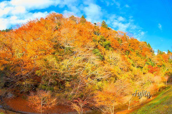 養老渓谷の紅葉名所の穴場「筒森もみじ谷」