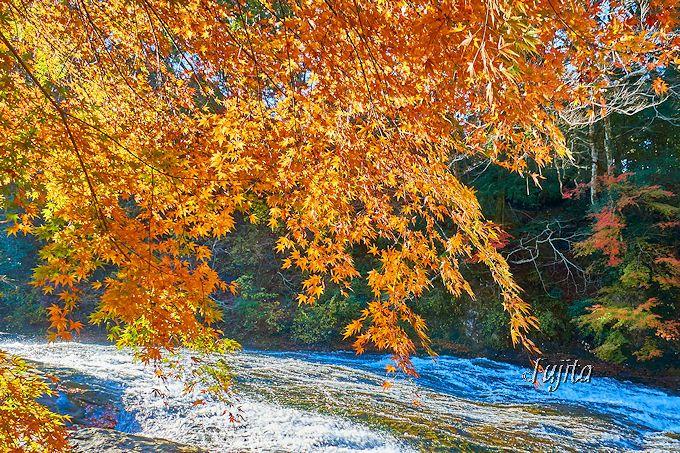 日本一遅い紅葉!千葉・養老渓谷で、絶対見たい「養老の滝」と「懸崖境」