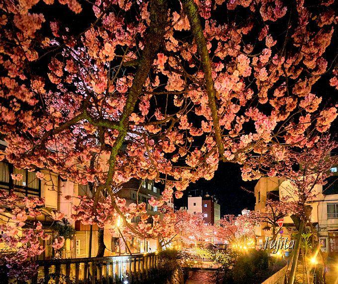 ドラゴン橋付近が花見に最適な理由
