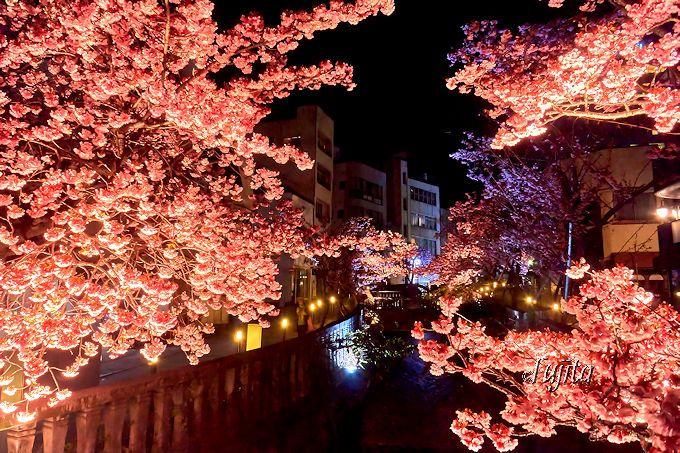 夜桜のライトアップも必見!