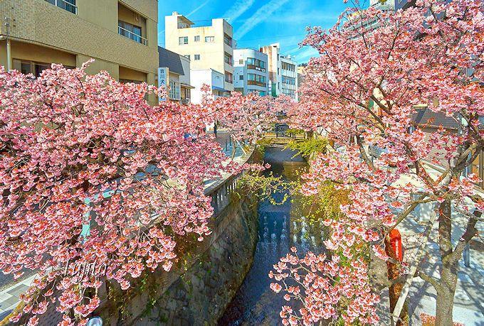 「糸川桜まつり」は熱海温泉中心部が開催場所