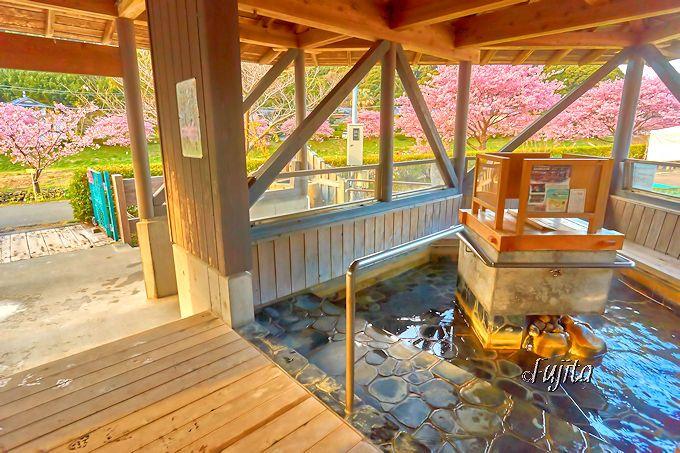 南伊豆町「みなみの桜と菜の花まつり」は足湯から花見可能!
