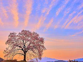 一日で七変化?「わに塚の桜」絶景コラボ一挙紹介!〜山梨県韮崎市〜