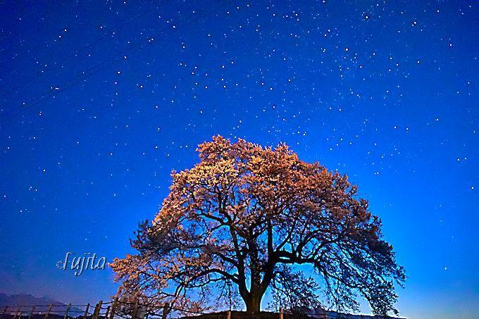 神秘の絶景!わに塚の桜と星空のコラボ