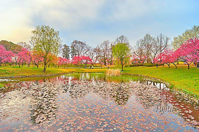 古河桃まつりは、花桃と池のコラボも美しい!