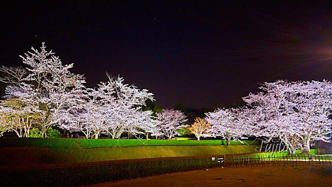 夜桜屏風で知る額縁効果の威力!国立歴史民俗博物館