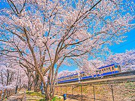 桜と電車の絶景コラボ!山梨・勝沼ぶどう郷駅の花見名所「甚六桜」|山梨県|トラベルjp<たびねす>