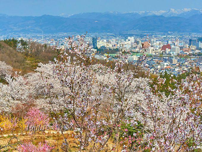 花見山公園の頂上から、福島市街地を一望!
