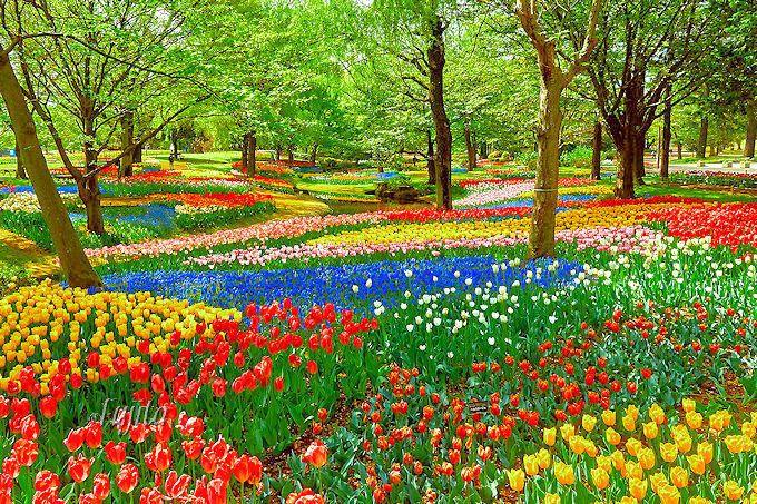 セグウェイガイドツアーも登場「昭和記念公園」を遊び尽くす