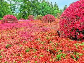 つつじの絶景でアートな花見!千葉・DIC川村記念美術館の自然散策路|千葉県|トラベルjp<たびねす>