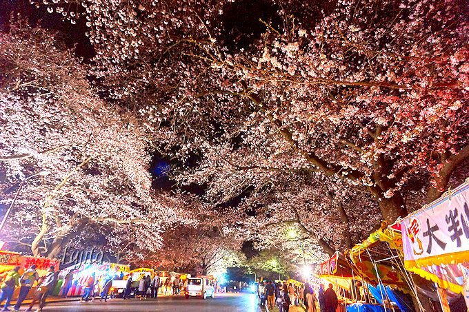 「吉高の大桜」の後は、小林牧場の夜桜もおすすめ!