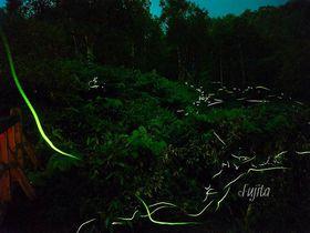 4つの日本一を持つホタルの乱舞!志賀高原・石の湯ロッジのゲンジボタルが凄い!|長野県|トラベルjp<たびねす>