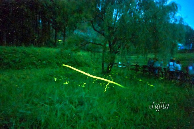 ゲンジとヘイケの蛍が乱舞!群馬県・箱島ホタル第一保護地で天然のホタルを見よう!